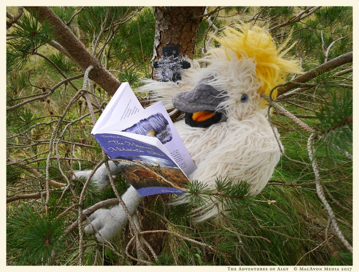Algy-reading-Midwinter-Star-to-teddy-for-011217.jpg
